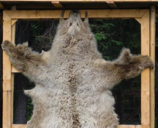 Animal pelt