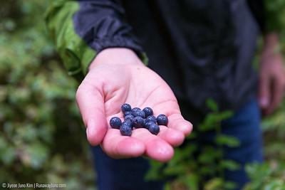 Foraging in the forest of Tutka Bay