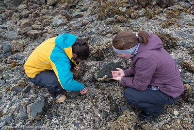 Intertidal expedition in Tutka Bay