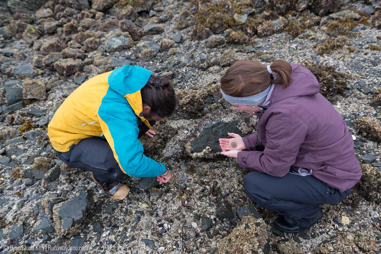 Intertidal expedition in Tutka Bay