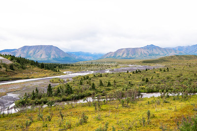 Boreal landscape in Denali National Park