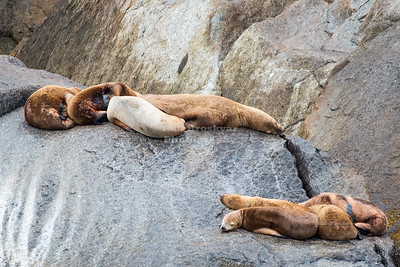 Sea lions resting on a rock island