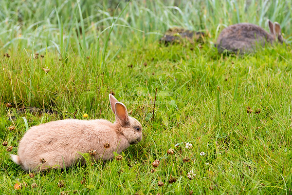 Rabbits in Valdez