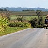 A young Amish man drives his mules home for lunch after working in the field.