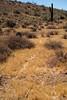Animal trail in the desert