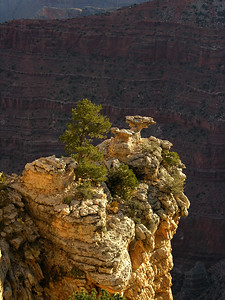 © Joseph Dougherty. All rights reserved.   Pinyon Pine (or piñon), Pinus edulis, clinging to rocks on a butte at the Grand Canyon.