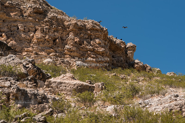 Turkey Vultures at Montezuma Castle