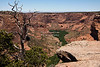 Dead Tree at the western end of the Spider Rock Overlook with an aerial view over Canyon de Chelly, Arizona, USA