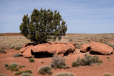 Tree in a rock