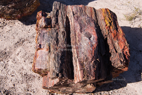 Petrified wood log