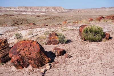 Tree shards in the desert