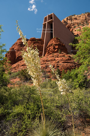 White Yuccas blooming at the Chapel of the Holy Cross in Sedona
