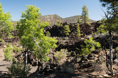 Bonita Lava Flow at Sunset Crater