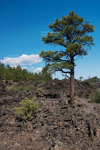 Bonita Lava Flow at Sunset Crater Volcano