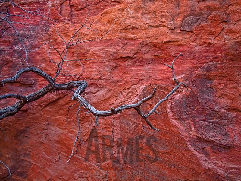 Fay Canyon, Coconino National Forest, Sedona, Arizona