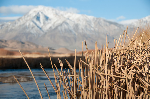 Grass on the Owens River