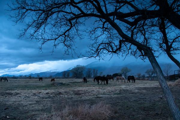 A herd of horses