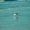 san diego - coronado island beach - 09262008_MG_5865
