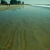 san diego - coronado island beach - 09262008_MG_5872