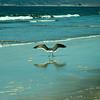 san diego - coronado island beach - 09262008_MG_5853