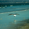 san diego - coronado island beach - 09262008_MG_5852