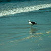 san diego - coronado island beach - 09262008_MG_5854