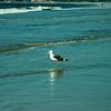 san diego - coronado island beach - 09262008_MG_5867