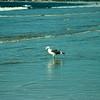san diego - coronado island beach - 09262008_MG_5866