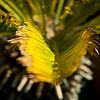 san diego - foliage - 09262008_MG_5996