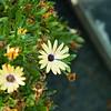 san diego - foliage - 09262008_MG_5998
