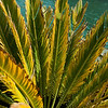 san diego - foliage - 09262008_MG_5997