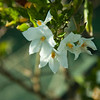 san diego - foliage - 09262008_MG_5999