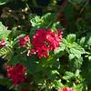 san diego - foliage - 09262008_MG_5994