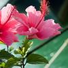 san diego - foliage - 09262008_MG_5992