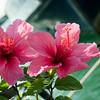 san diego - foliage - 09262008_MG_5993