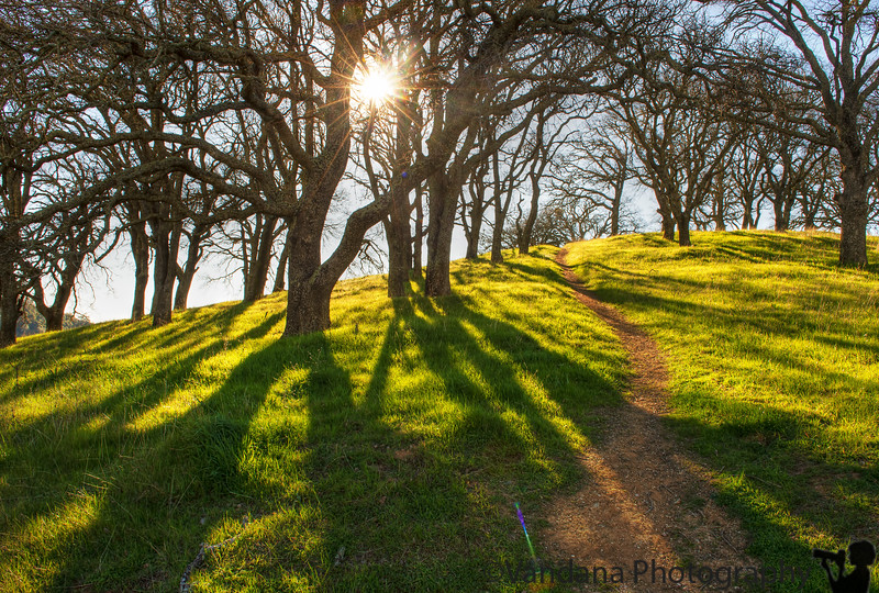 February 9, 2013 - Light and shadows at Mt.Diablo State Park, Walnut Creek, CA
