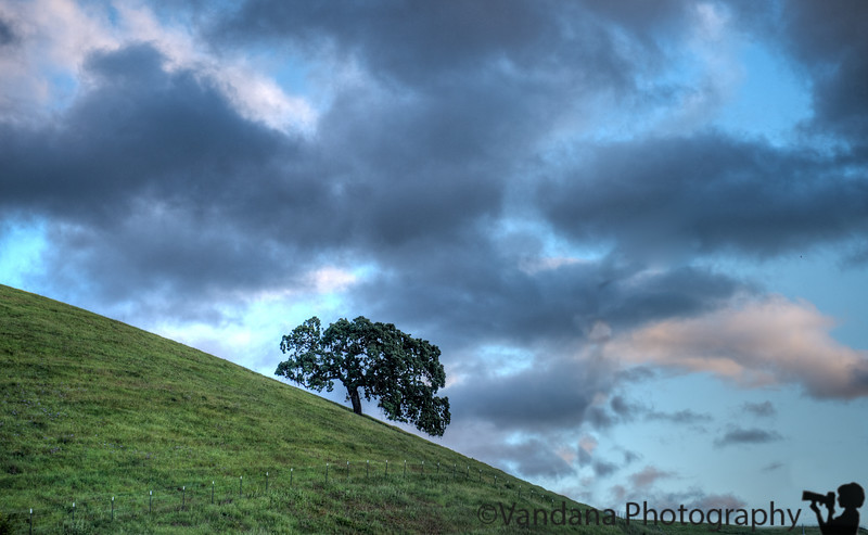 April 22, 2015 - the tree in the storm