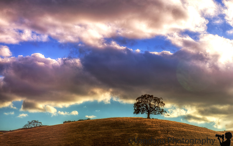 October 14, 2015 - the lone tree