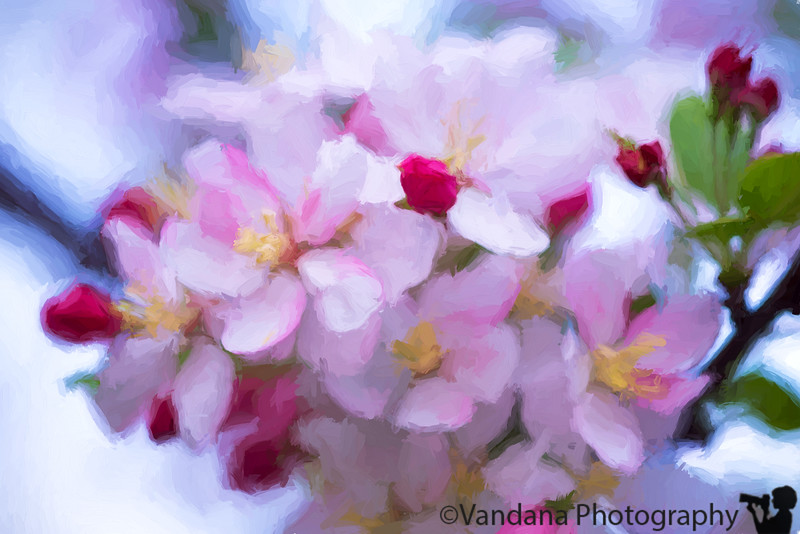 March 7, 2016 - Blossoms, by a Van Gogh wannabe !