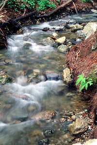 © Joseph Dougherty. All rights reserved.  Small redwood forest stream in Big Sur.