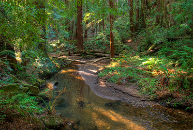 © Joseph Dougherty. All rights reserved.   Coastal redwood forest stream