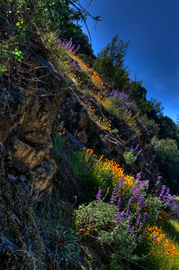 © Joseph Dougherty. All rights reserved.  The sun crests over a hillside full of wildflowers.
