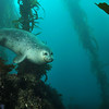 © Joseph W. Dougherty. All rights reserved.