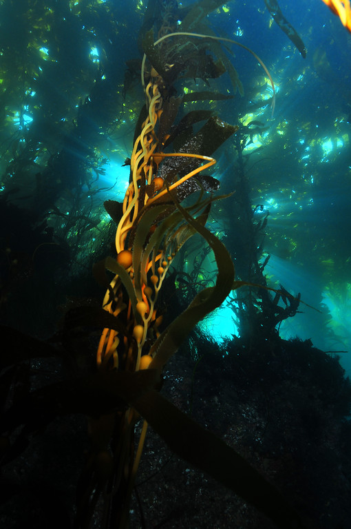California Underwater