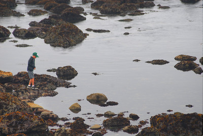 © Joseph Dougherty. All rights reserved.  Exploring tidepools in the shallows below the Battery Point Lighthouse in Crescent City, CA.