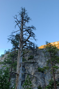 © Joseph Dougherty. All rights reserved.    Old dead tree, standing in Kennedy Creek Canyon.