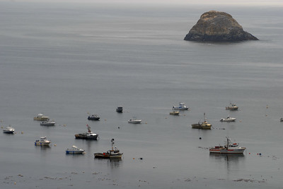 © Joseph Dougherty. All rights reserved.  Boats at anchor in the calm waters of Trinidad Harbor, CA.