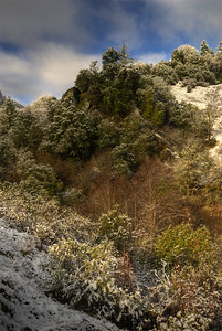 © Joseph Dougherty. All rights reserved.  Hillside of manzanita and live oaks dusted with atypically low elevation snow.