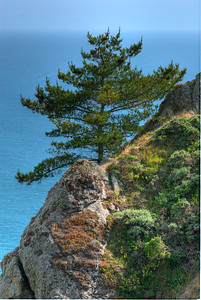 © Joseph Dougherty. All rights reserved.  Tree at the cliff's edge, Muir Beach Overlook.