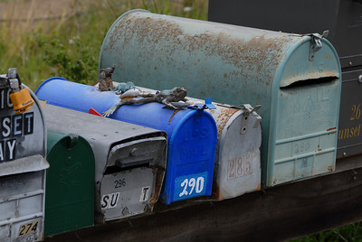 © Joseph Dougherty. All rights reserved.  Mailboxes on a back-country road.